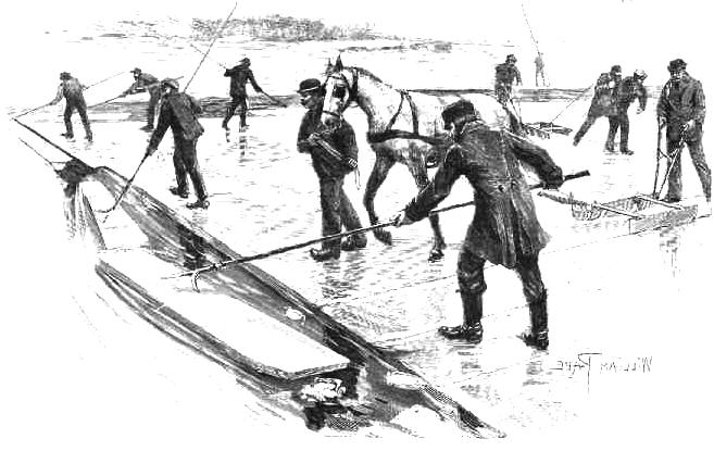 """Eisernte in Rummelsburg Quelle: W.Berdrow. und W. Pape 1896: Zeitschrift """"Gartenlaube"""" Nr. 47, S. 797"""